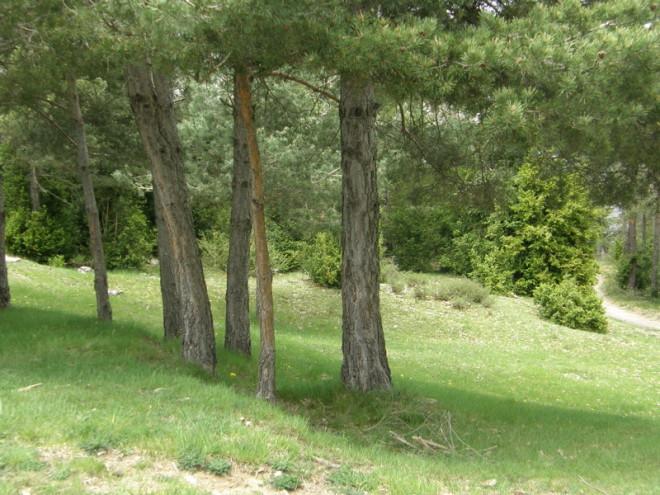 Barcelona posee 66 reas verdes entre parques y jardines for Parques y jardines de barcelona